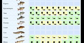 Выбор оптимальной снасти для ловли рыбы в зависимости от времени года