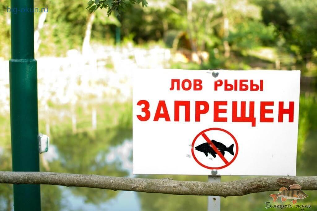 с какого числа запрет на рыбную ловлю
