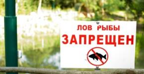 Нерестовый запрет 2017